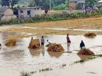 किसानको पिरमार्का नबुझ्ने सरकारको कुनै औचित्य छैन : आईटी आर्मी
